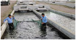 Fish hatchery in Los Ojos