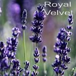 Purple Adobe Lavender Farm, NM