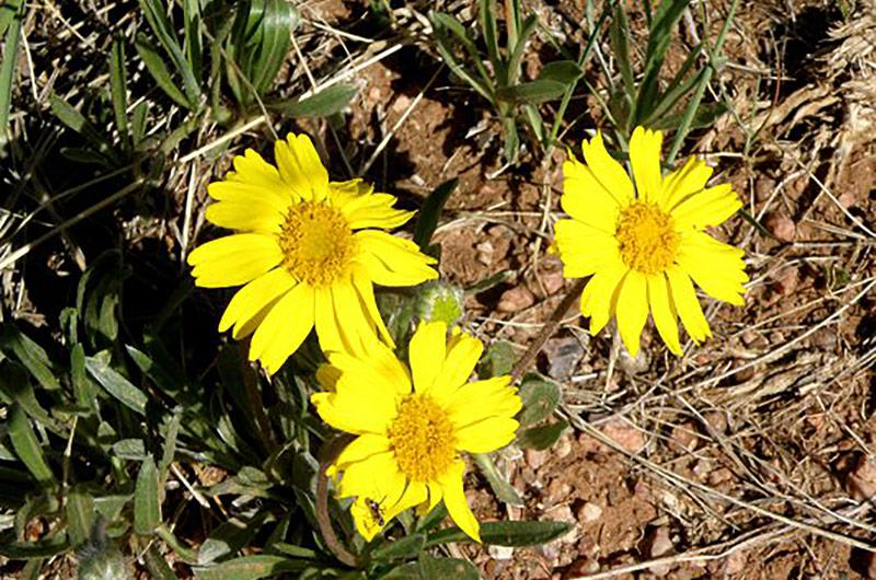 botany-slideshow-perky-sues